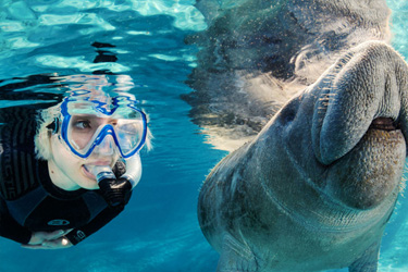 Swim With Manatees in Crystal River